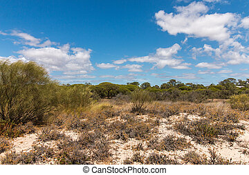 Vegetation on the sand dunes of Ria Formosa marshlands...