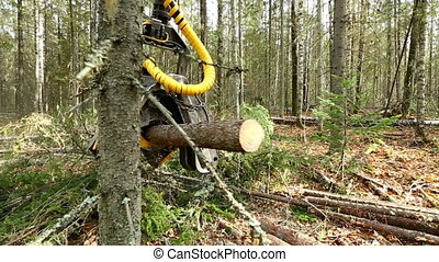 View of logger cuts down tree and its branches - Forestry...
