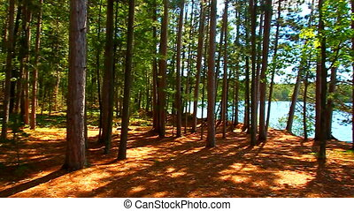 Northern Highlands State Forest - Northwoods forest scenery...