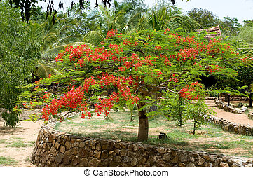 Beautiful gulmohar flower on a bright sunny day