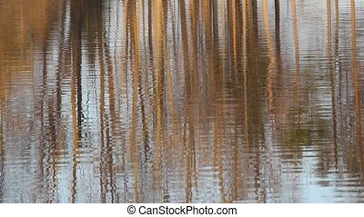 Tree Reflection - Reflection of trees in water
