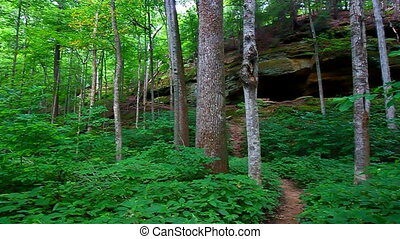 Turkey Run State Park Indiana - Hiking trail through the...