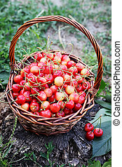 cherries in a large basket