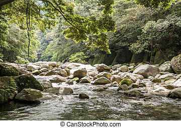 Brook flowing among stones which surrounded with green...