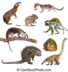 Mammals of South America on white - Mammals of South America...