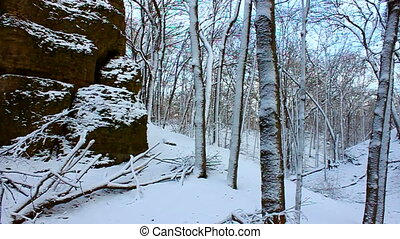 Snowy Forest Scenery Illinois - Big Rock of Rock Cut State...