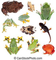 Tyłek, Od, żaby, komplet, Na, biały,