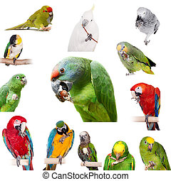 Parrots playing with paws on white - Parrots playing with...