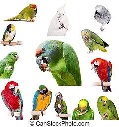 Papugi, interpretacja, Z, łapy, Na, biały,