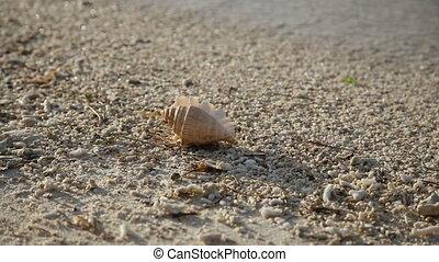 Seashell  on the sand beach