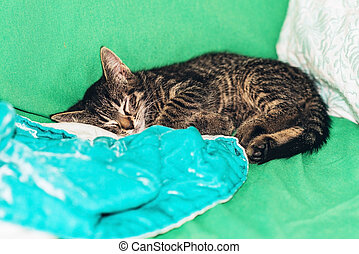 Cute little tabby kitten fast asleep