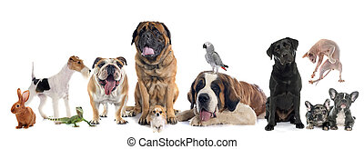 group of pet