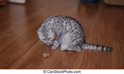 Cute Cat Playing With Toy At Home, lying on the floor.