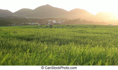 Low Angled Shot of Farmfield - Landscaped farmfield with...