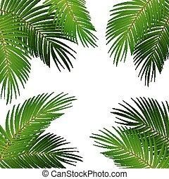 Palm Leaf Vector Background Illustration EPS10