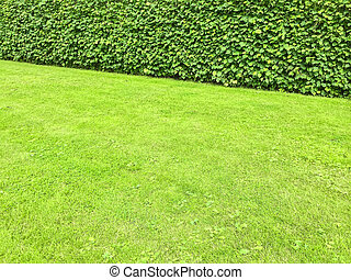 Green lawn and hedge in a summer park.