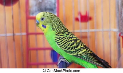 Home Parrot in a Bird Cage - Beautiful and exotic looking...