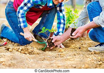 Close up of unrecognizable senior couple planting little...