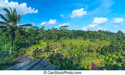 Landscape of famous rice terraces near Ubud in Bali, Indonesia