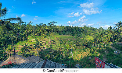 Landscape of rice terraces near Ubud in Bali, Indonesia