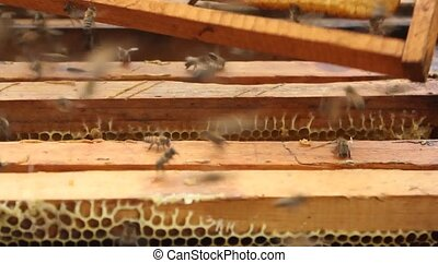 Work in the apiary beekeeper. - Beekeeper inspecting bees...
