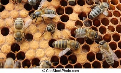 Work bees in the hive - Caring for the future generation of...
