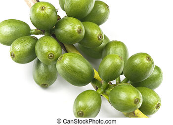 Green coffee beans - Coffee beans on a coffee plant