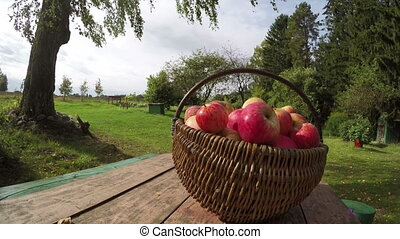 Wicker basket full of ripe apples on table in homestead on...