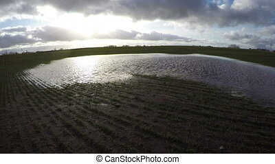 water puddle on young wheat field