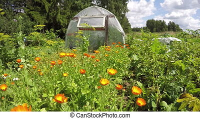 greenhouse in vegetable garden - Polyethylene greenhouse in...