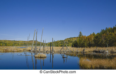 secluded moose heaven - secluded marsh in the wood where...