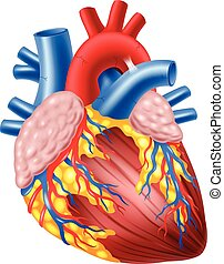 Illustration of Human Hearth - Vector illustration of Human...