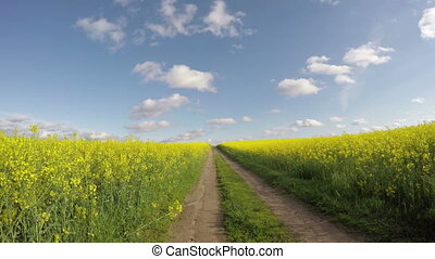 Road through flowering rapa field - Road through yellow...
