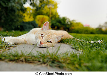 Cute Cat Lying on the Ground - A cute red cat lying on the...