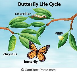 Butterfly life cycle diagram illustration