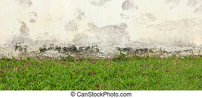 Green Grass and old wall