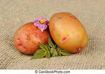 New Potatoes with Leaves and Flowers on Sackcloth - New...