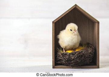 鶏, 概念, イースター, 若い, 家
