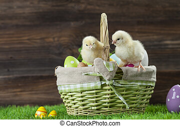 Easter bucket with eggs, young easter chickens around