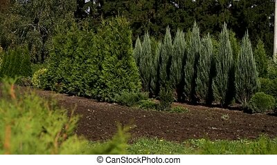 Nursery Plants For Timber And Garden