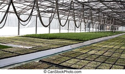 Automatic Watering Of Plants (Pine Trees) In The Greenhouse