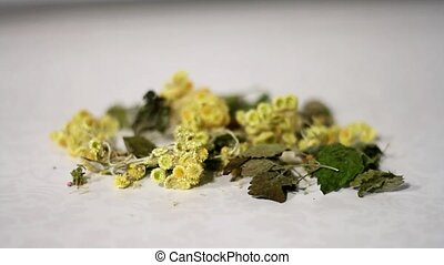 Dried healing plants mixed by hand - Dried healing plants...