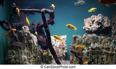 Aquarium with tropical fish - Home aquarium with tropical...
