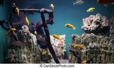 Aquarium with tropical fish - Home aquarium with tropical...