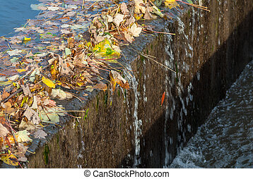 River Overflow Autumn - A canal overflow blocked with Autumn...