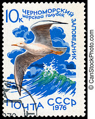Stamp printed in Russia shows bird Slender-billed Gull -...