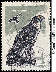 Stamp printed in the USSR shows Common buzzard - USSR -...