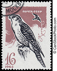 Stamp printed in the USSR shows Gyrfalcon - USSR - CIRCA...