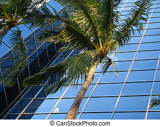 A sleek, modern office building with palm trees