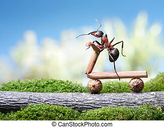 ants bicycle